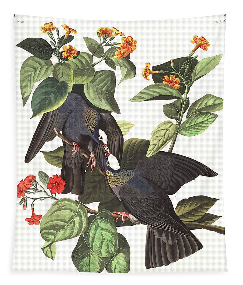 White-crowned Pigeon Tapestry featuring the painting White-crowned Pigeon by John James Audubon