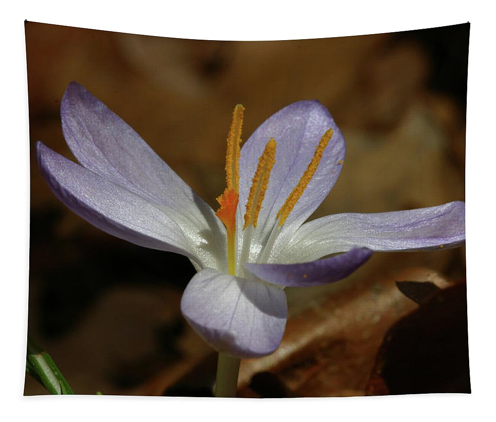 White Flowers Tapestry featuring the photograph White Flower by Michael Munster