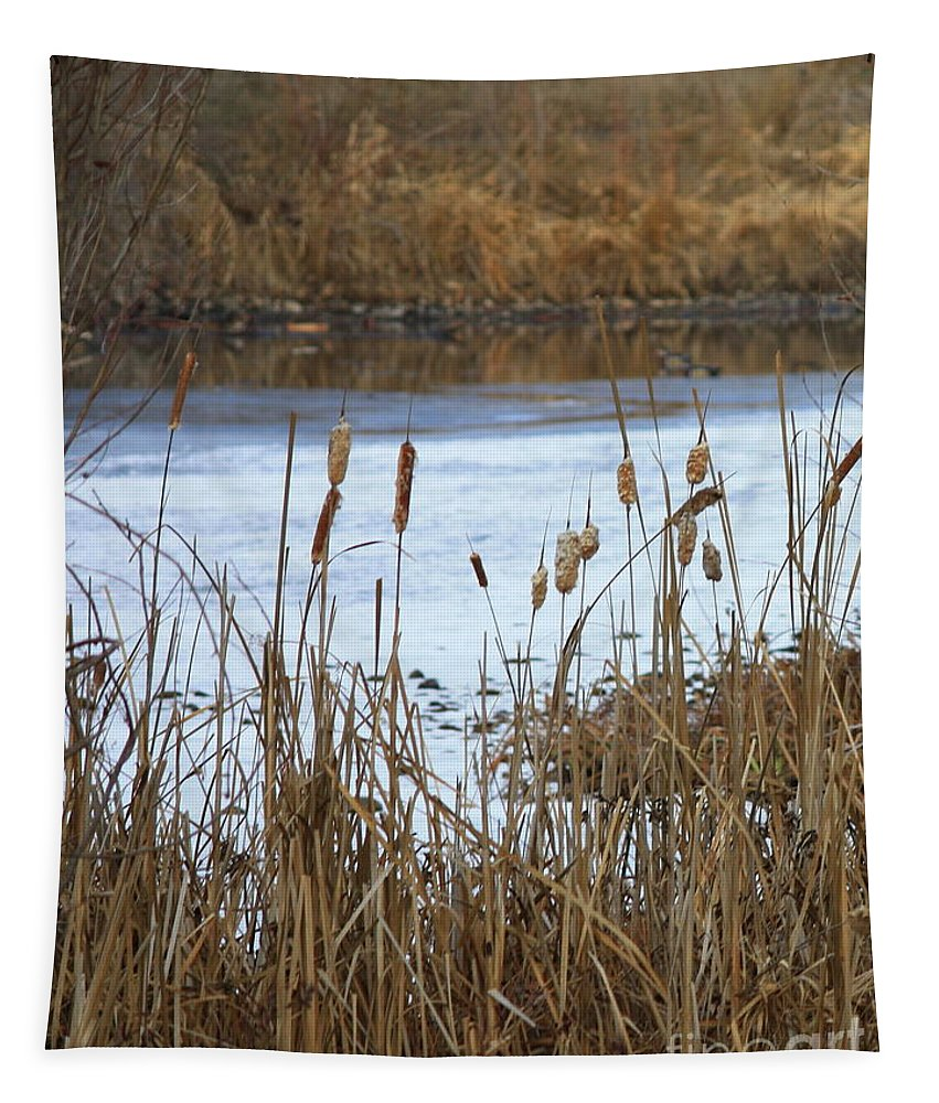 Cattails Tapestry featuring the photograph Winter Cattails by Carol Groenen