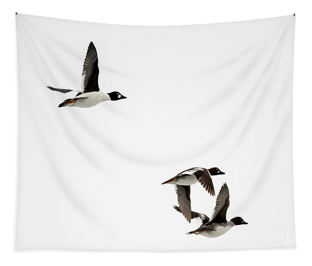 Mergansers Tapestry featuring the photograph Winter Flight by Mike Dawson