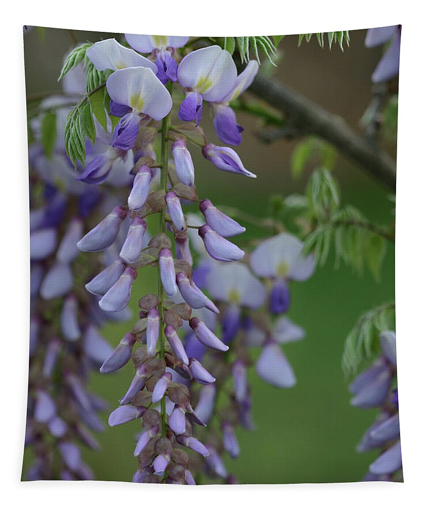 Flowers Tapestry featuring the photograph Wisteria by Michael Munster