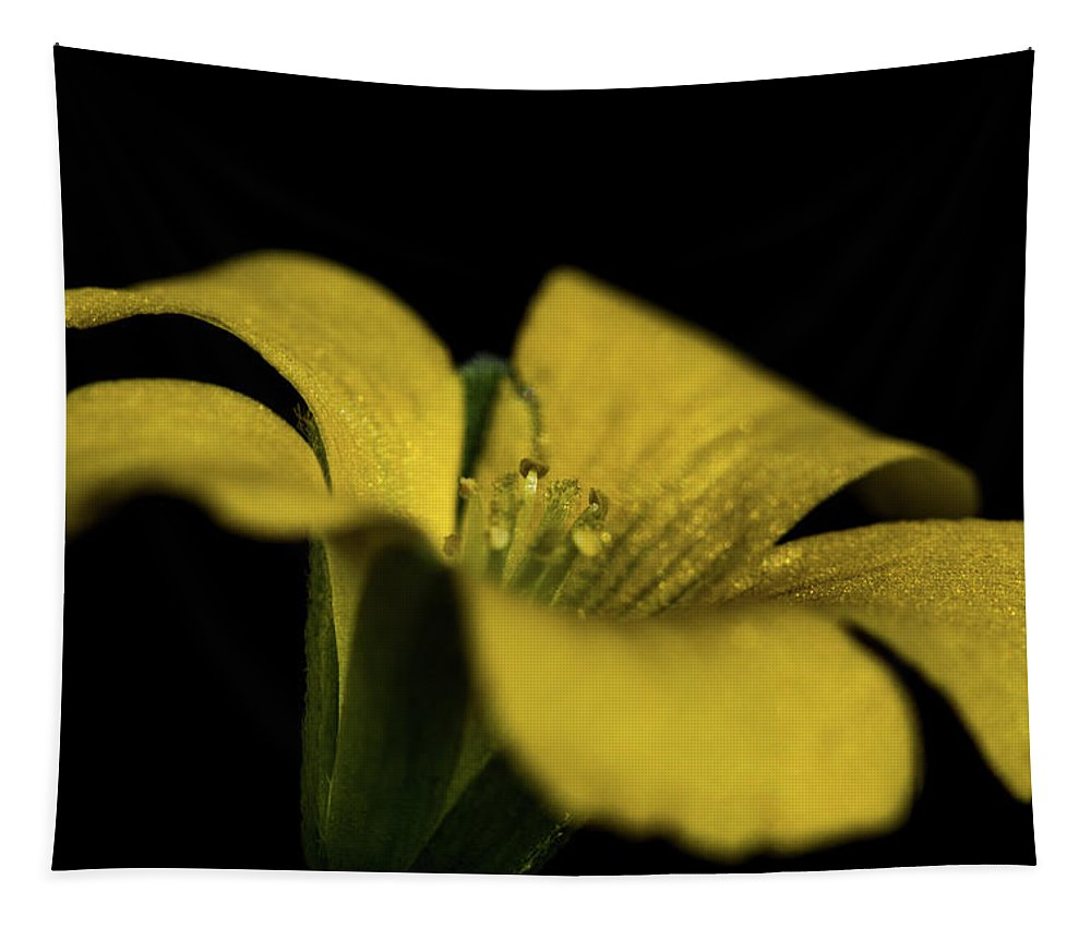Jay Stockhaus Tapestry featuring the photograph Yellow Clover by Jay Stockhaus