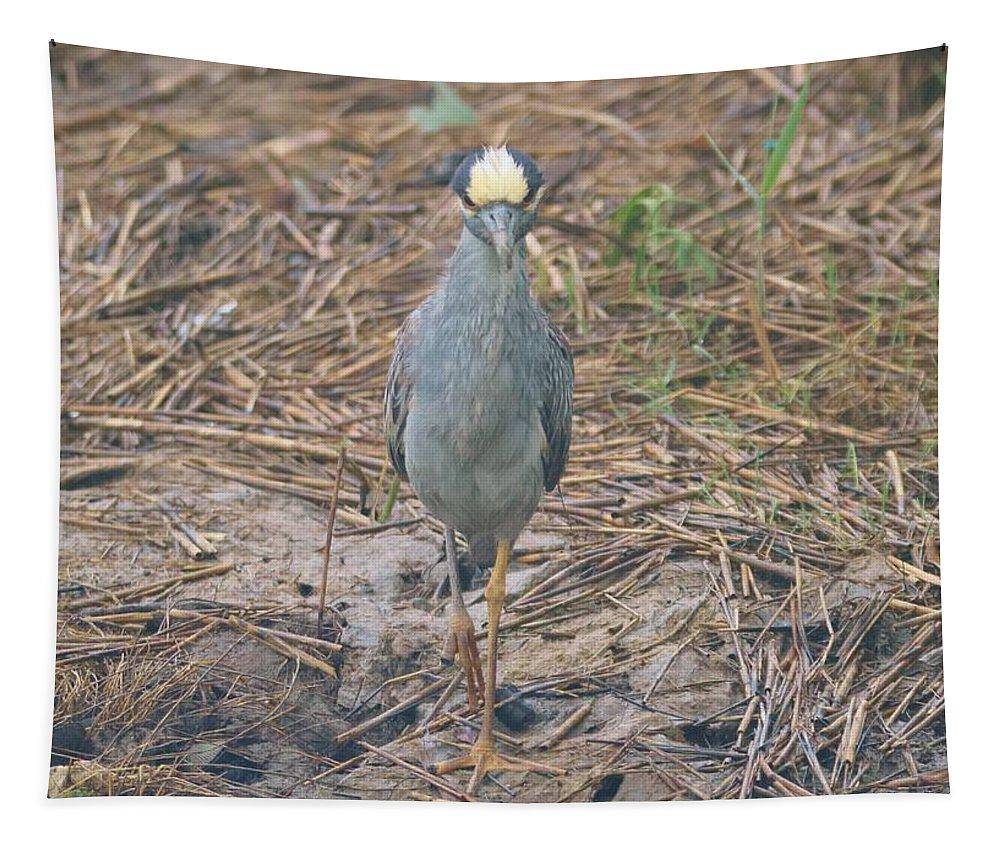 Yellow-crowned Night-heron Tapestry featuring the photograph Yellow Crowned Night Heron At Tidal Creek by Karen Silvestri