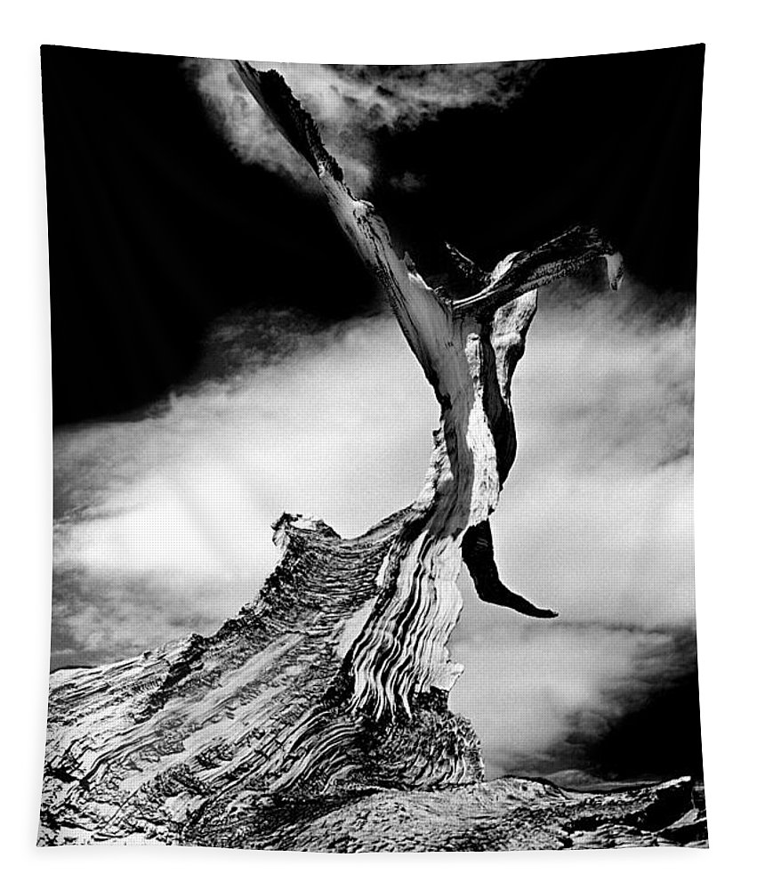 Tree Tapestry featuring the photograph 1000 Years To Create by Paul W Faust - Impressions of Light