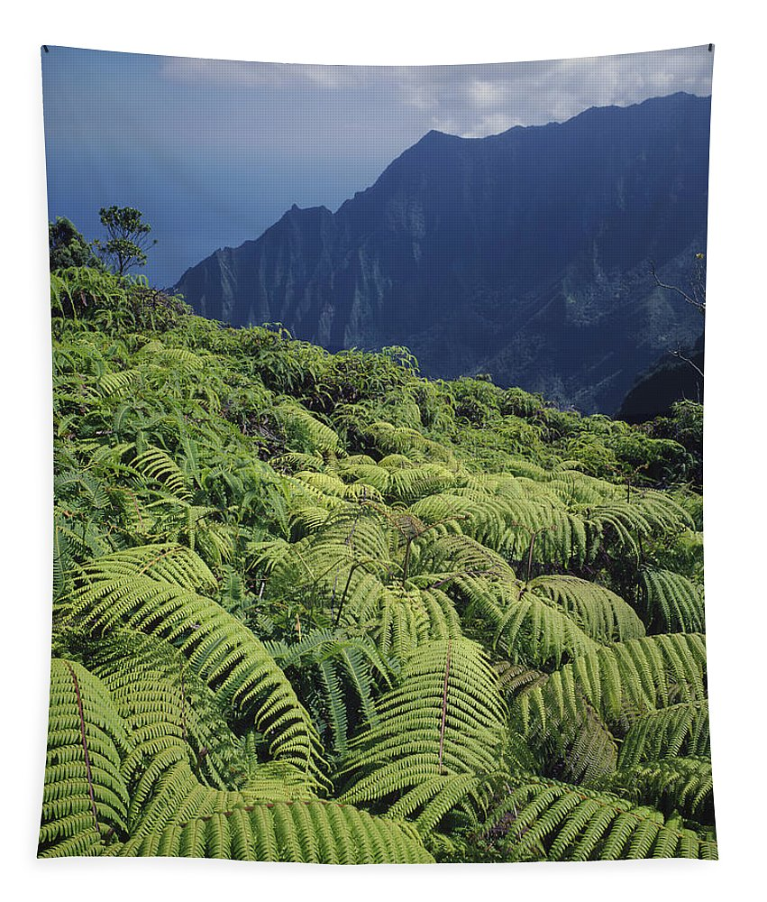 Ferns Tapestry featuring the photograph 100139 Amaumau Ferns Hawaii by Ed Cooper Photography