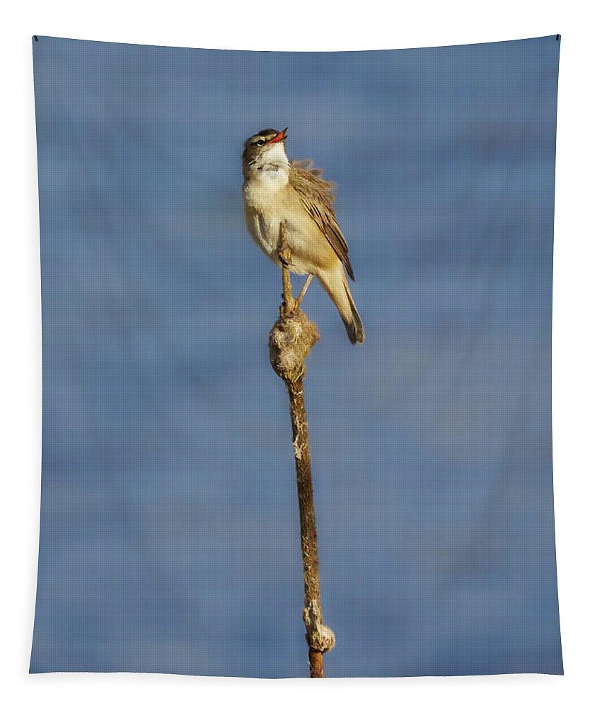 Acrocephalus Schoenobaenus Tapestry featuring the photograph Sedge Warbler by Jouko Lehto