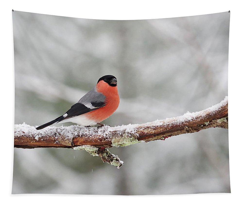 Finland Tapestry featuring the photograph Eurasian Bullfinch In Winter by Jouko Lehto