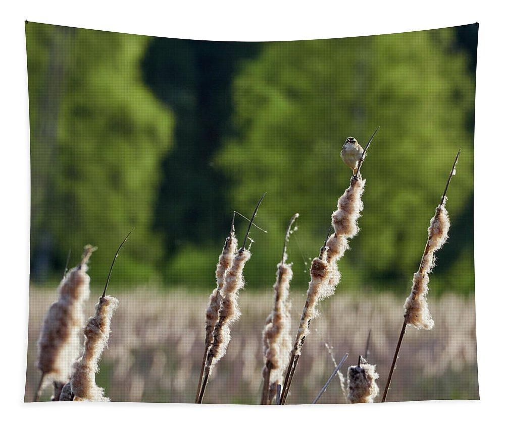 Isosuo Tapestry featuring the photograph Sedge Warbler by Jouko Lehto