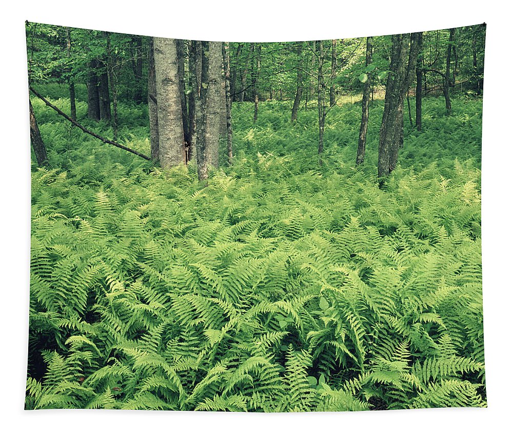Ferns Tapestry featuring the photograph 146113 Frens In Pisgah Nat Forest H by Ed Cooper Photography