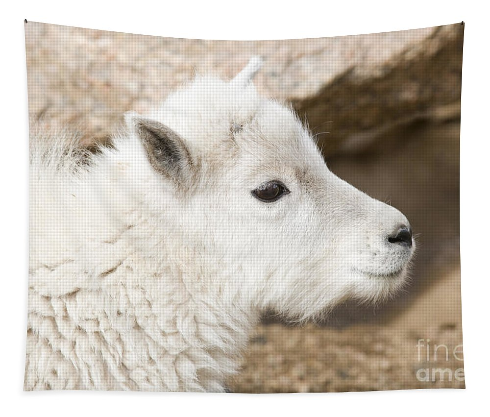 Goat Tapestry featuring the photograph Baby Mountain Goats On Mount Evans by Steve Krull