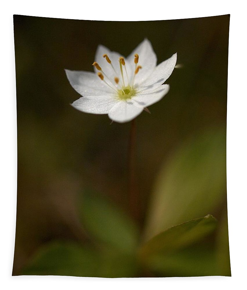 Lehtokukka Tapestry featuring the photograph Arctic Starflower by Jouko Lehto