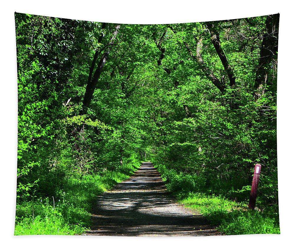 Appalachian Trail In Maryland Tapestry featuring the photograph Appalachian Trail In Maryland by Raymond Salani III