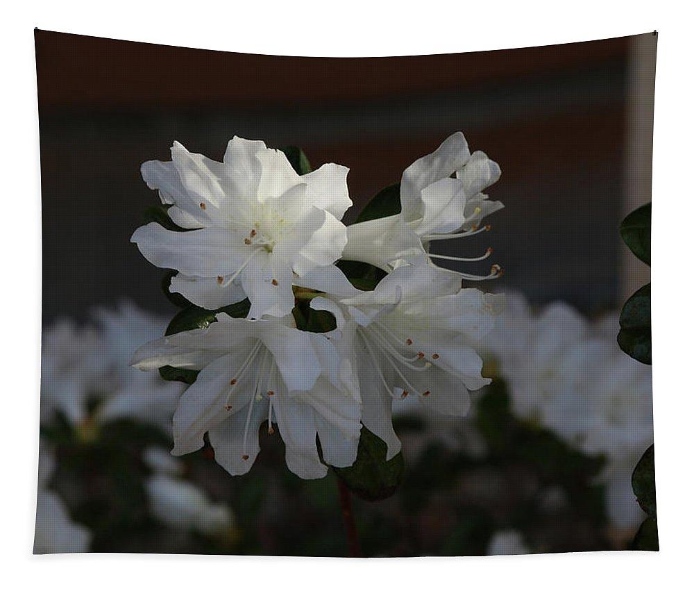 Azalea Tapestry featuring the photograph Azalea Flowers by Michael Munster