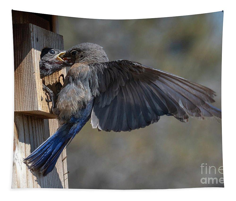 Bluebird Tapestry featuring the photograph Beak To Beak by Mike Dawson