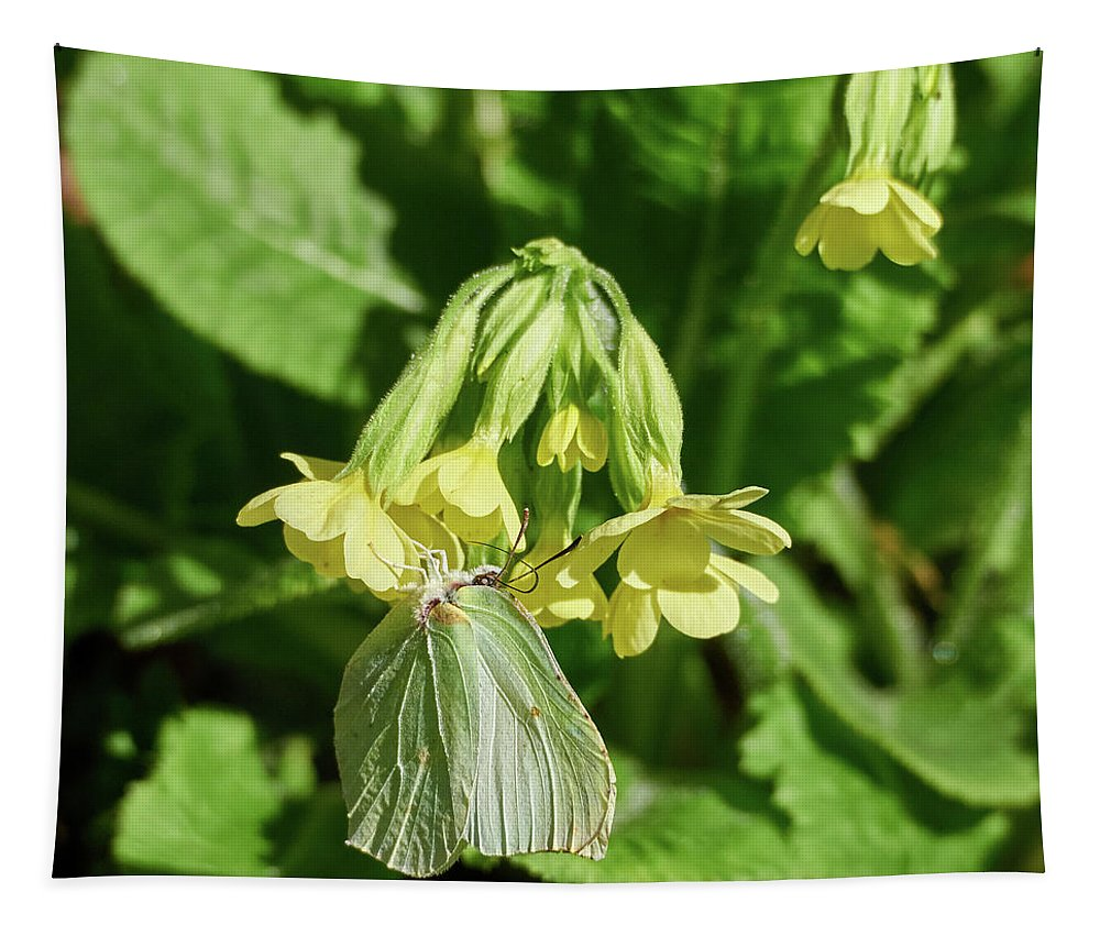 Finland Tapestry featuring the photograph Brimstone On Cowslip Primrose by Jouko Lehto