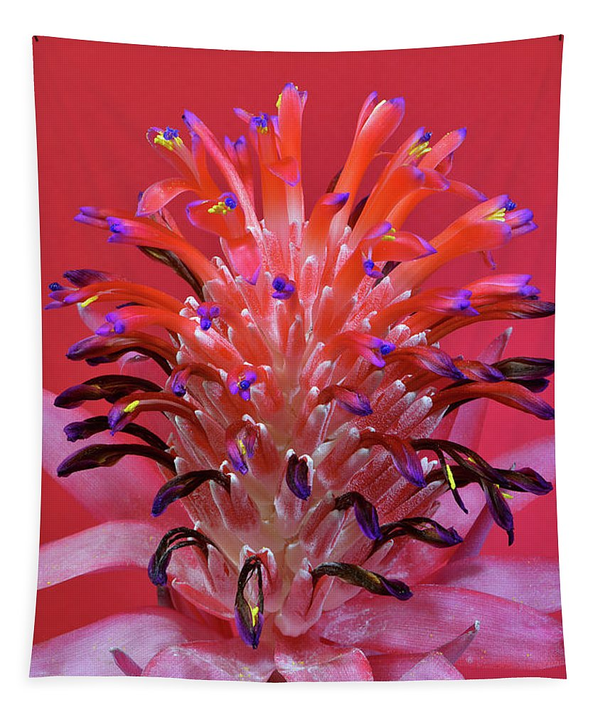 Botanical Tapestry featuring the photograph Bromeliad by Edwin Verin