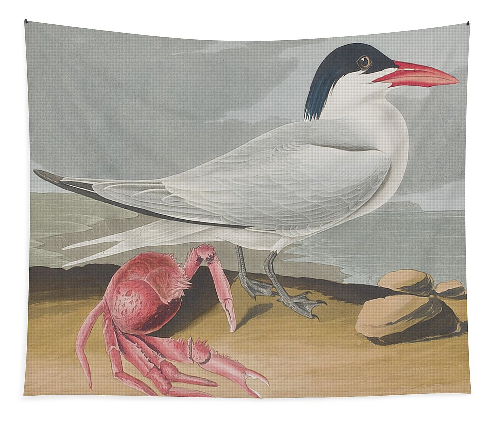 Tern Tapestry featuring the painting Cayenne Tern by John James Audubon