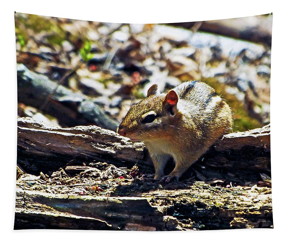 Bruce Bodden Tapestry featuring the photograph Chipmunk At Heckrodt by Bruce Bodden