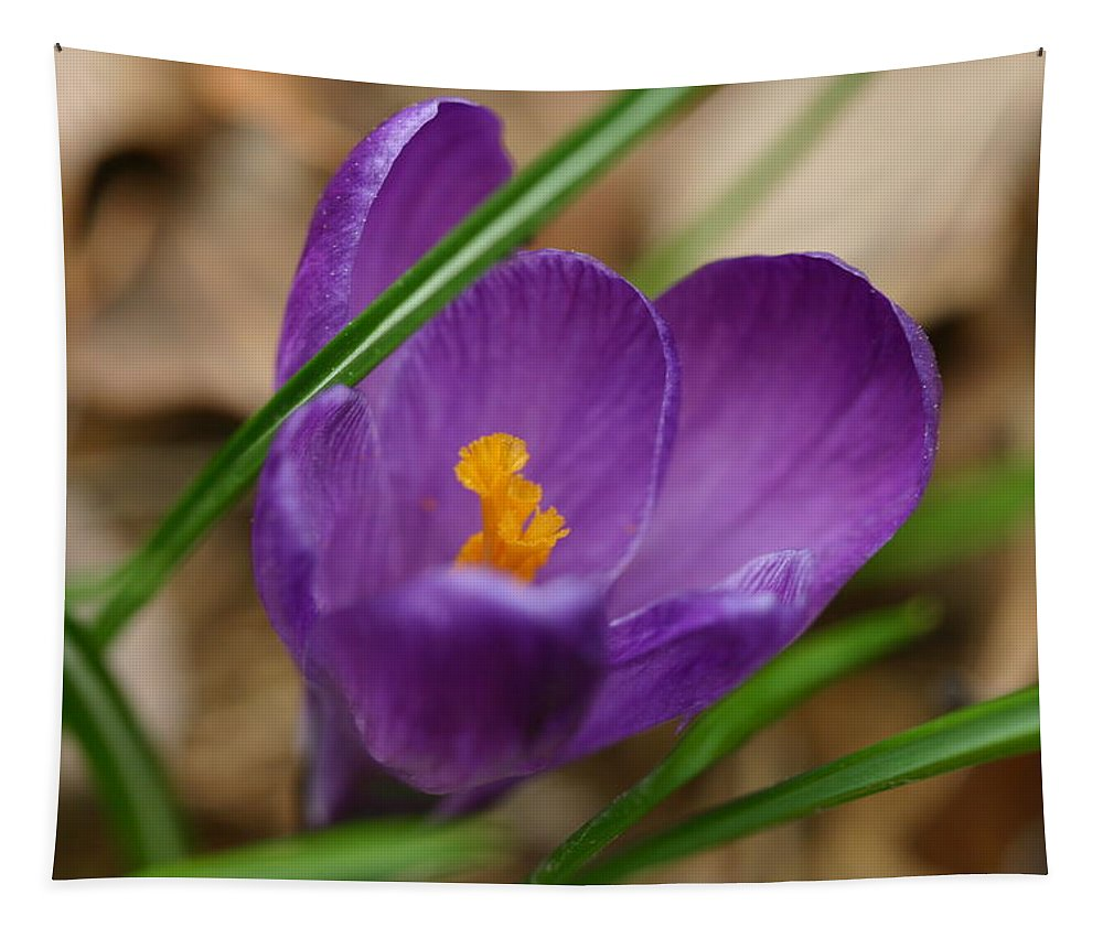 Crocus Tapestry featuring the photograph Crocus by Michael Munster