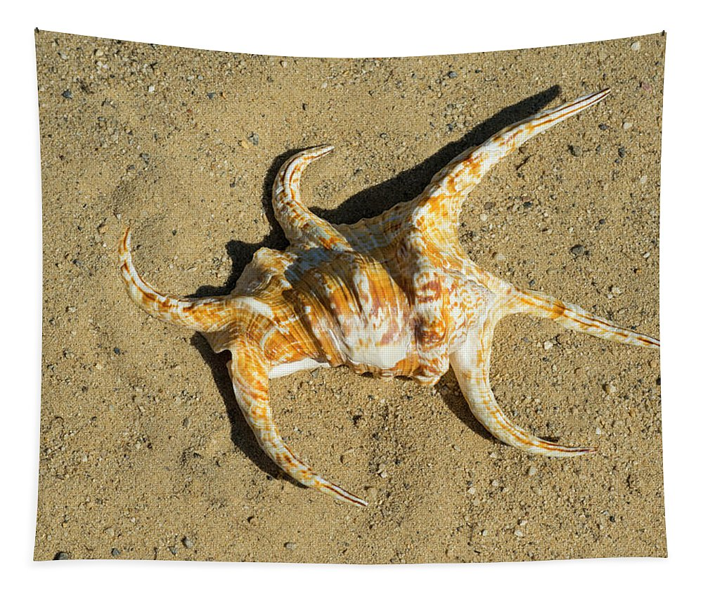 Lambis Arthritica Spider Conch Tapestry featuring the photograph Lambis Arthritica Spider Conch by Frank Wilson