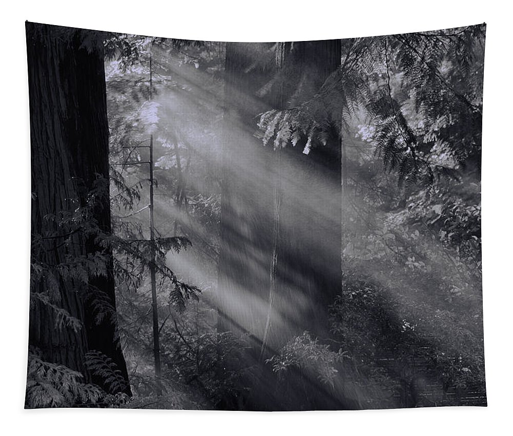 Tapestry featuring the photograph Let There Be Light by Don Schwartz