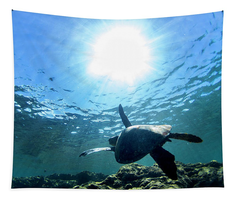 Sea Tapestry featuring the photograph Turtles View by Sean Davey