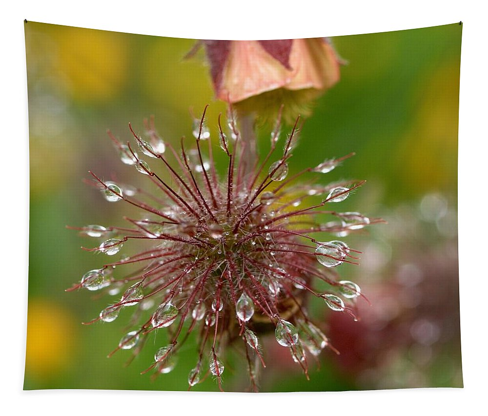 Lehtokukka Tapestry featuring the photograph Water Avens by Jouko Lehto