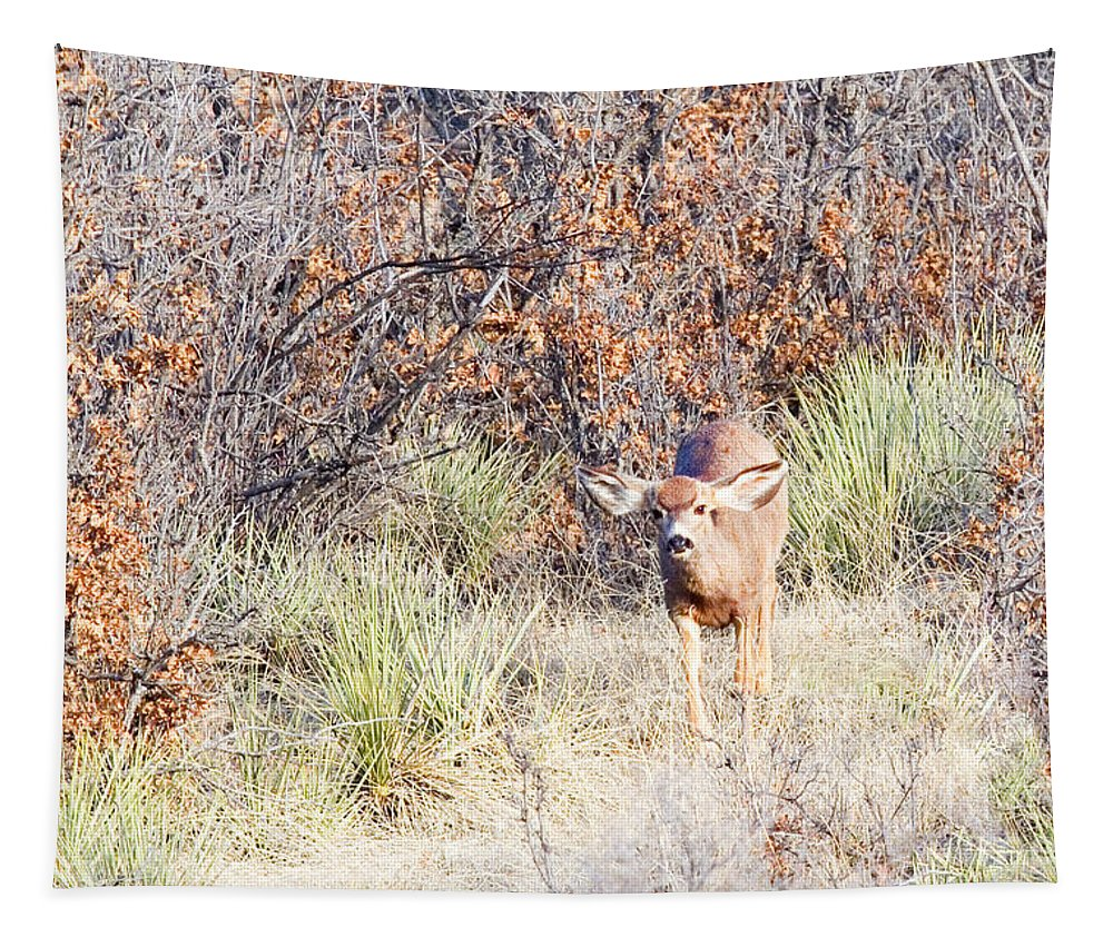 Animal Tapestry featuring the photograph Mule Deer Doe by Steve Krull