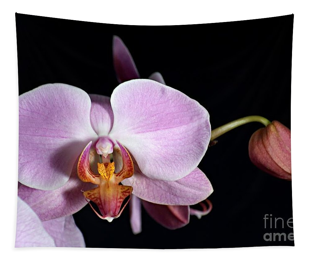Beauty Tapestry featuring the photograph Pink Orchid V by Ralf Broskvar