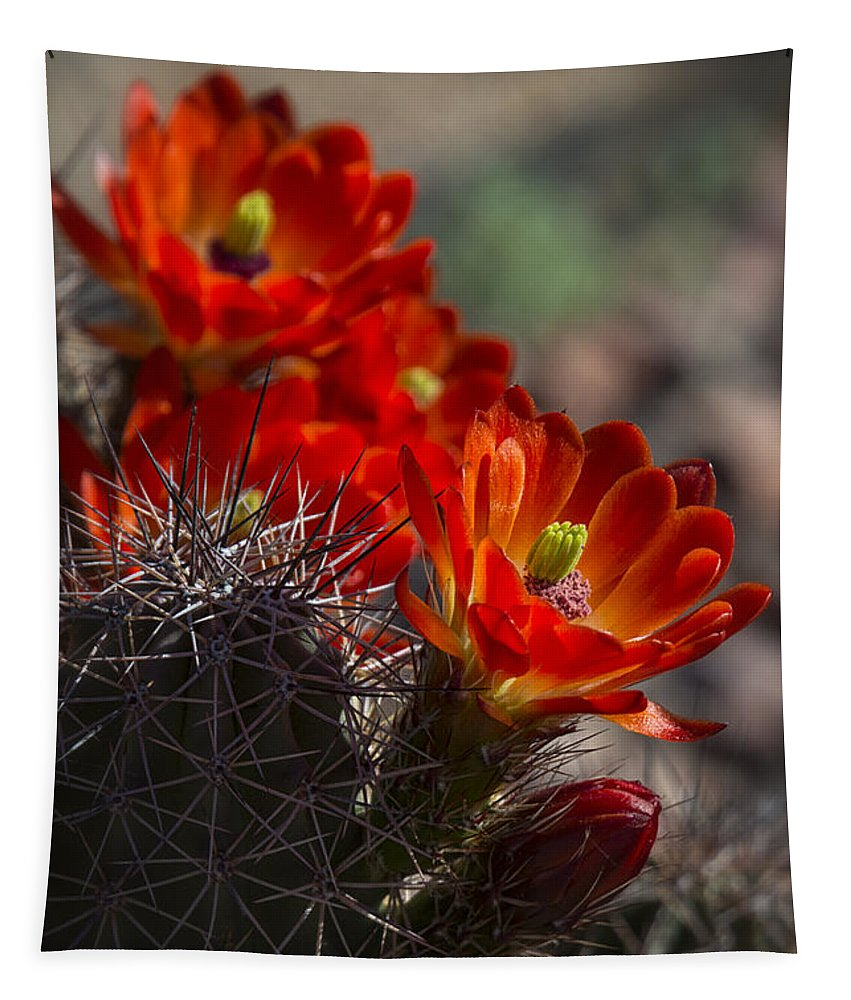 Hedgehog Cactus Tapestry featuring the photograph Red Hot Hedgehog by Saija Lehtonen