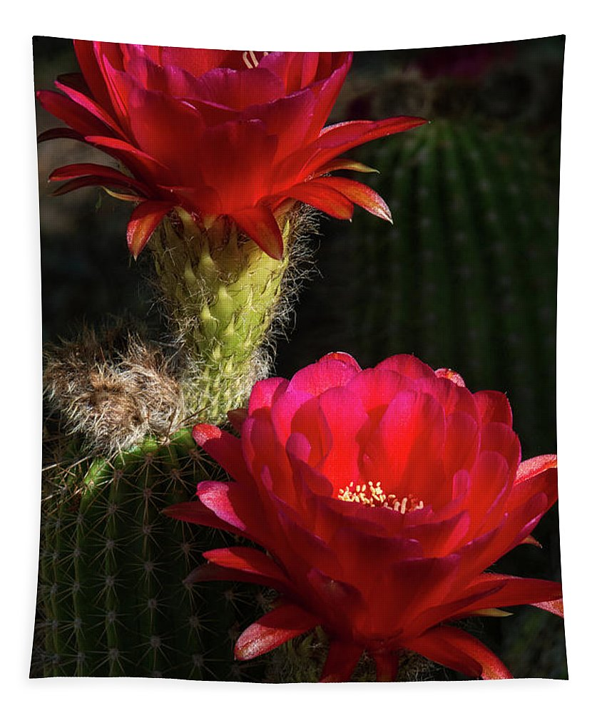Red Torch Cactus Flowers Tapestry featuring the photograph Red Torch Cactus by Saija Lehtonen