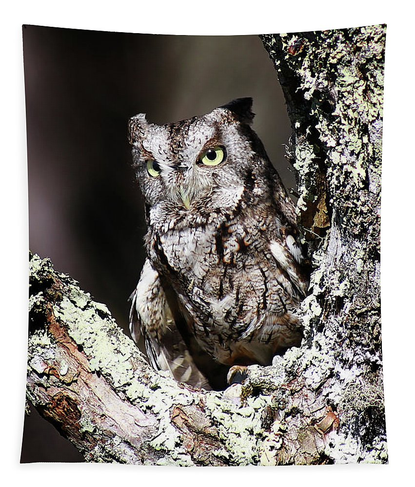 Screech Owl Tapestry featuring the photograph Screech Owl by SC Shank