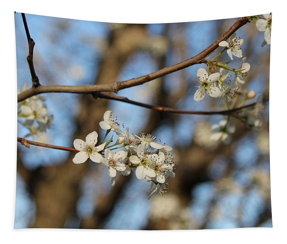 Flowering Trees Tapestry featuring the photograph Flowering Trees by Michael Munster