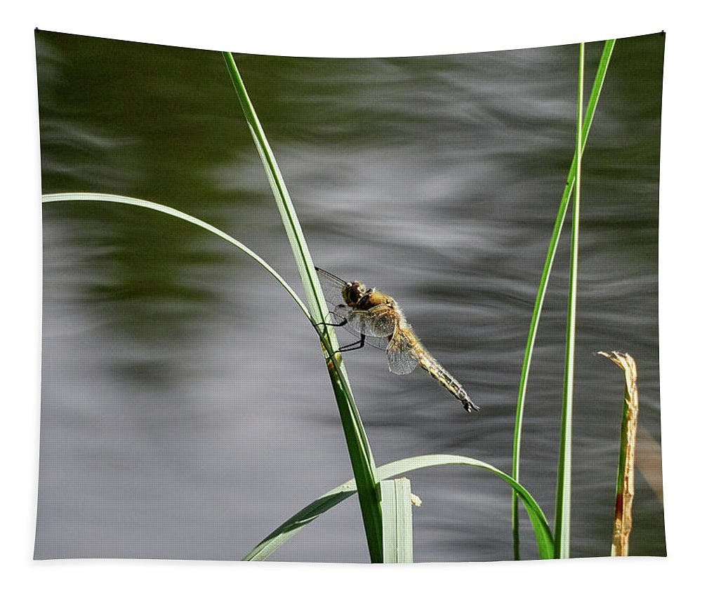 Finland Tapestry featuring the photograph Four-spotted Chaser by Jouko Lehto