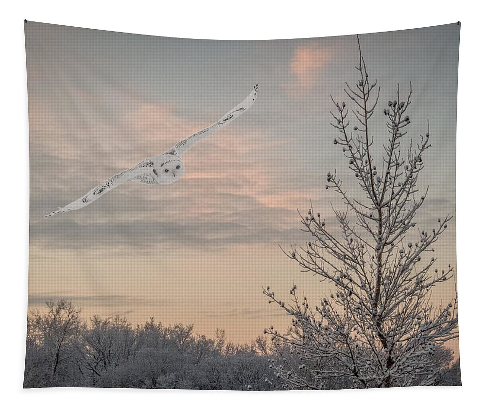 Snowy Owl Tapestry featuring the photograph Snowy Owl Glide by Patti Deters