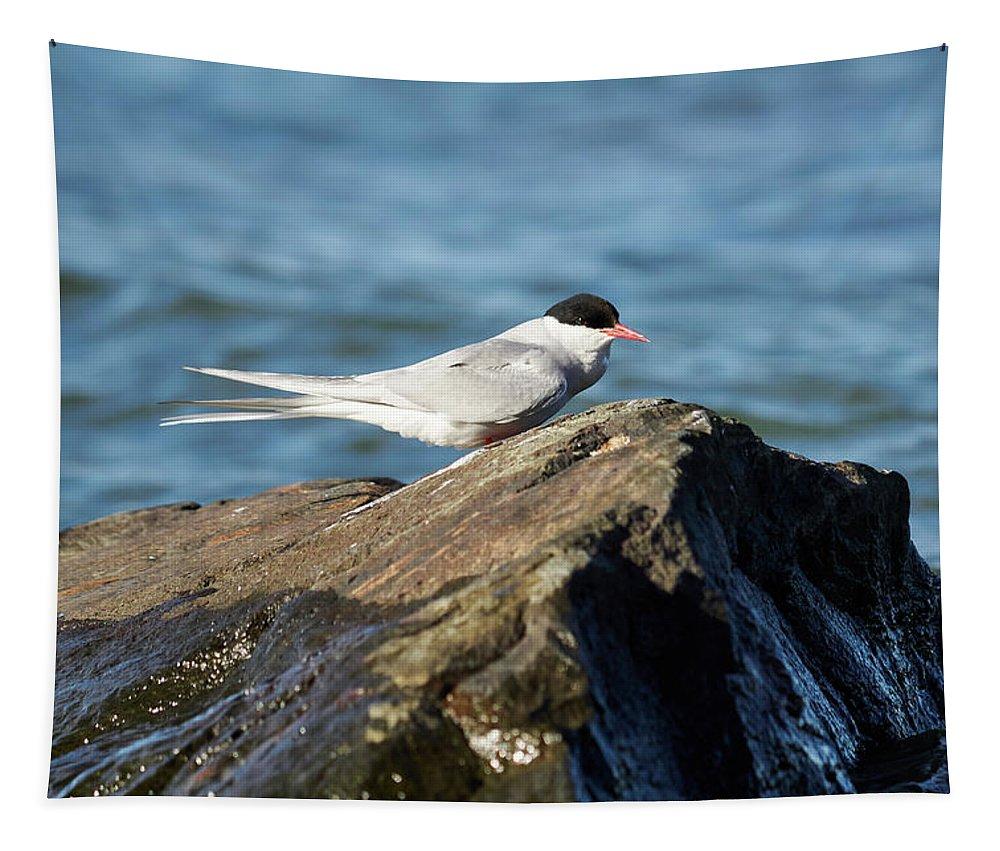 Jouko Lehto Tapestry featuring the photograph Arctic Tern by Jouko Lehto