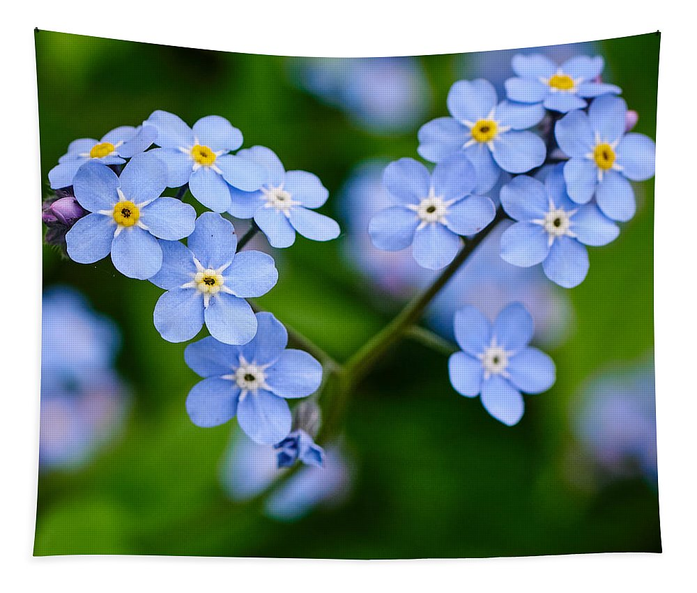 Finland Tapestry featuring the photograph Forget Me Not by Jouko Lehto