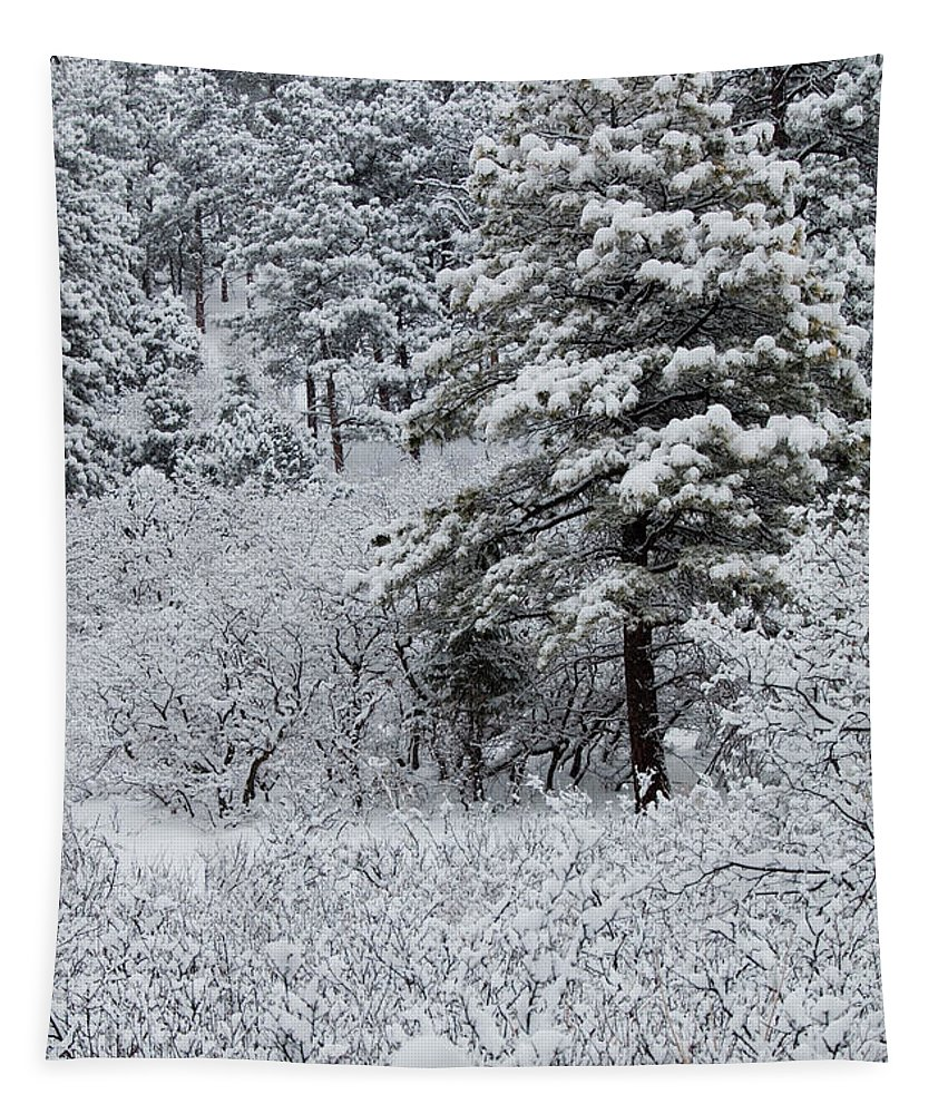 Blizzard Tapestry featuring the photograph Snowstorm In The Pike National Forest by Steve Krull
