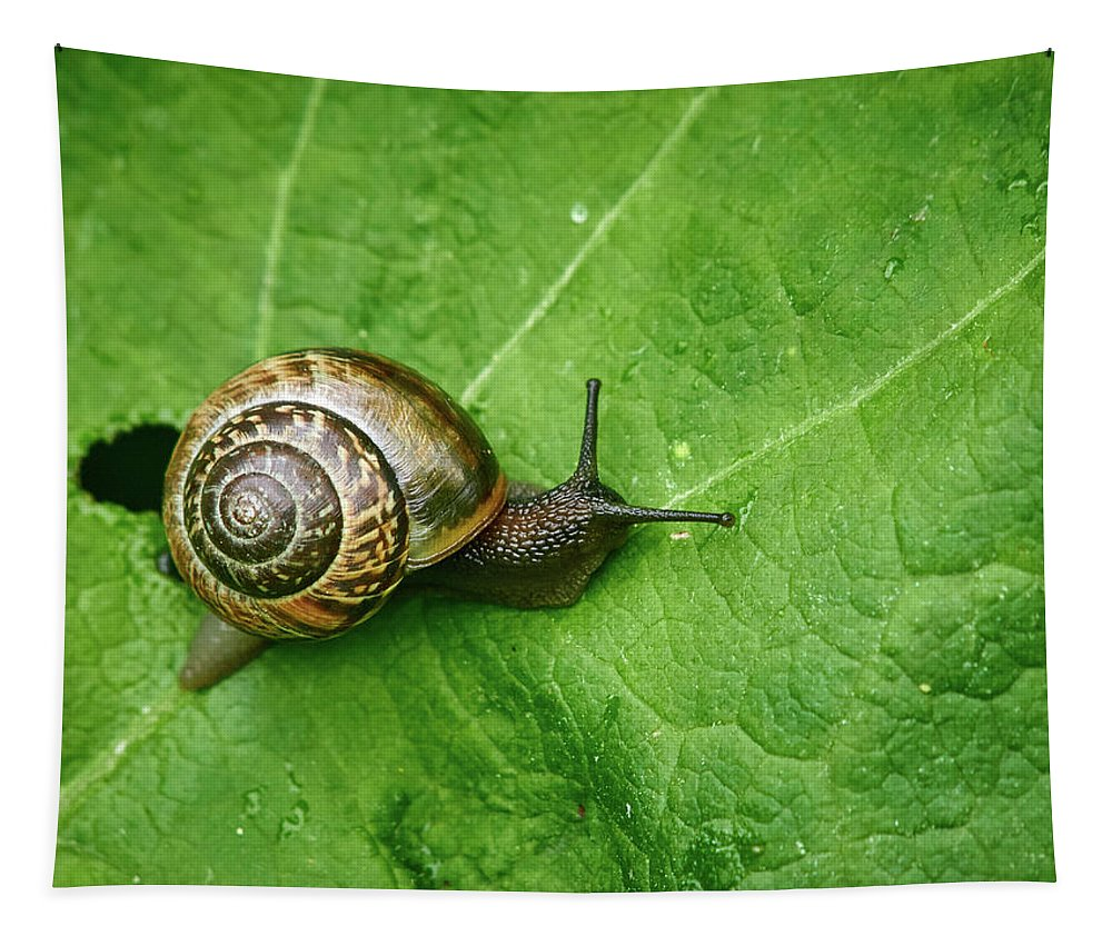 Finland Tapestry featuring the photograph Copse Snail by Jouko Lehto