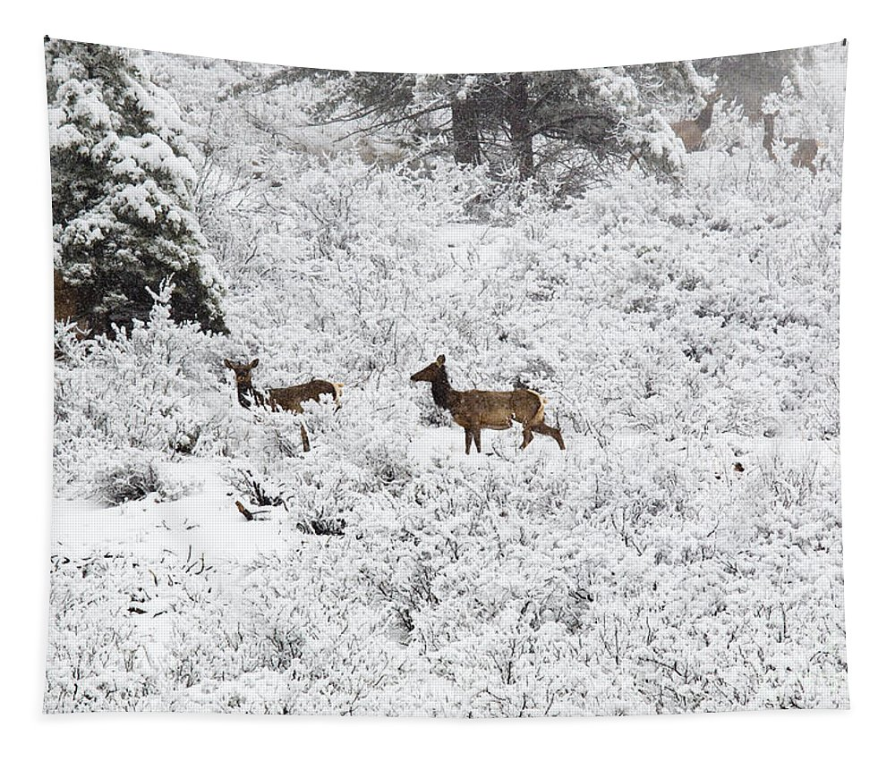 Elk Tapestry featuring the photograph Elk In Deep Snow In The Pike National Forest by Steve Krull