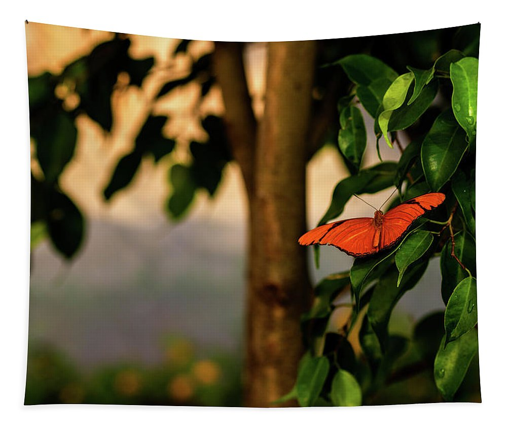 Butterfly Tapestry featuring the photograph Butterfly by Jay Stockhaus