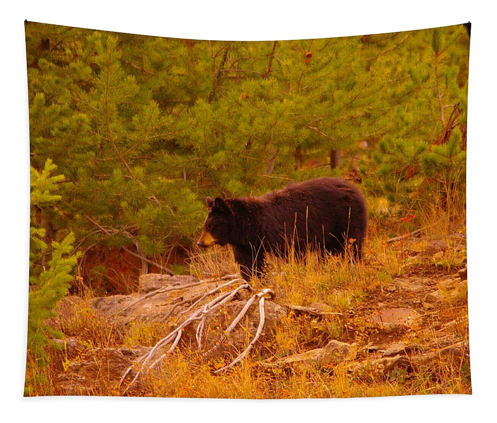 Bear Tapestry featuring the photograph A Bear Staring At Something by Jeff Swan