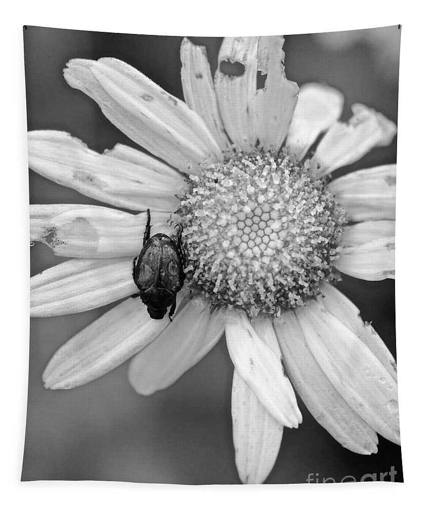 Daisy Tapestry featuring the photograph A Beetle And A Daisy by Rachel Morrison