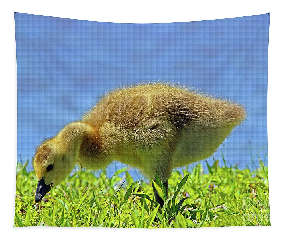 Gosling Tapestry featuring the photograph A Bite To Eat by Nicole Engelhardt