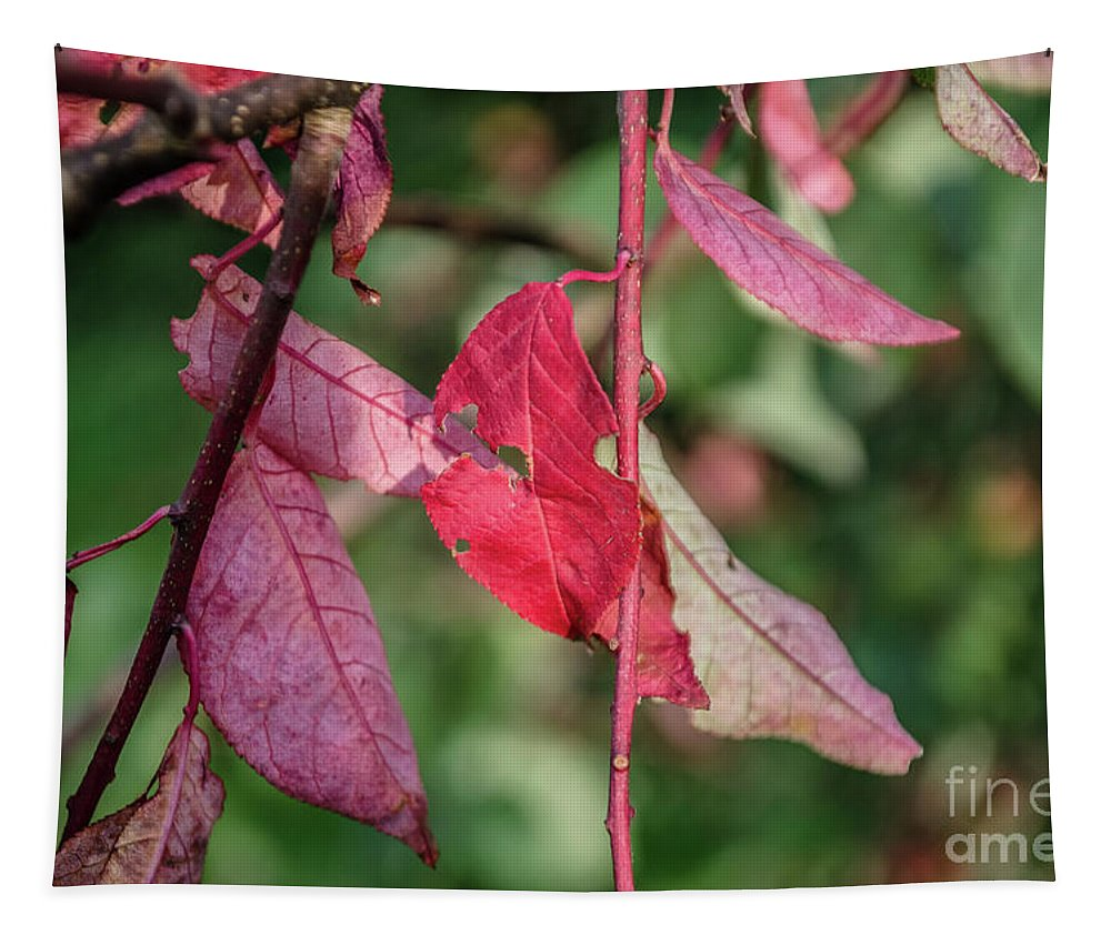 Michelle Meenawong Tapestry featuring the photograph A Bunch Of Red Leaves by Michelle Meenawong
