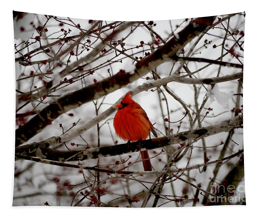 Cardinal Tapestry featuring the photograph A Cardinal In Winter by Rachel Morrison