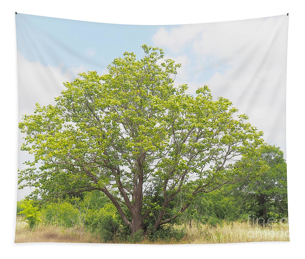 Catalpa Tapestry featuring the photograph A Catalpa Summer by Gary Richards