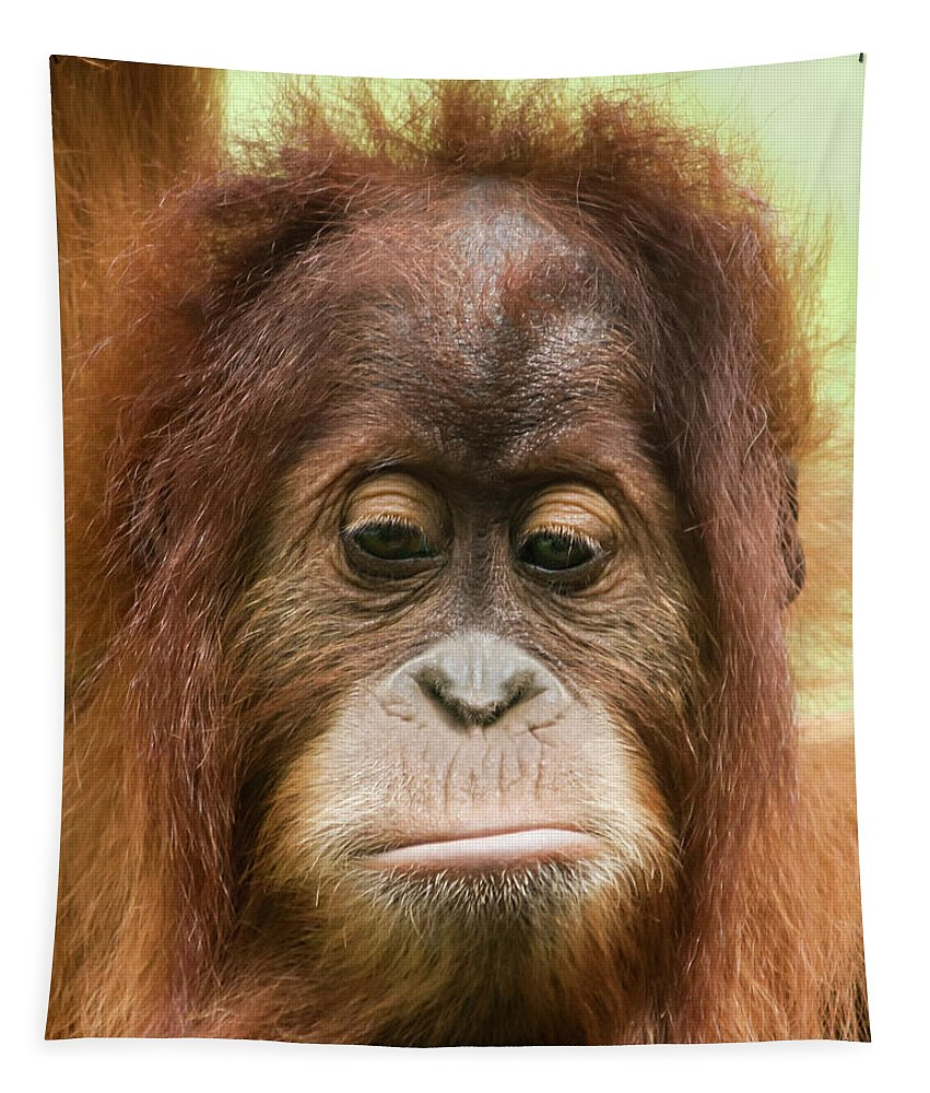 Animal Tapestry featuring the photograph A Close Portrait Of A Sad Young Orangutan by Derrick Neill