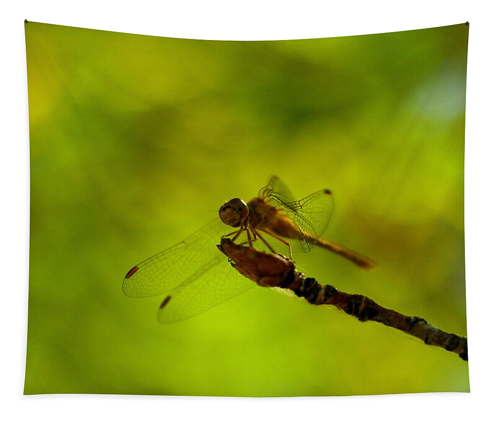 Dragonfly Tapestry featuring the photograph A Dragonfly Smile by Jeff Swan