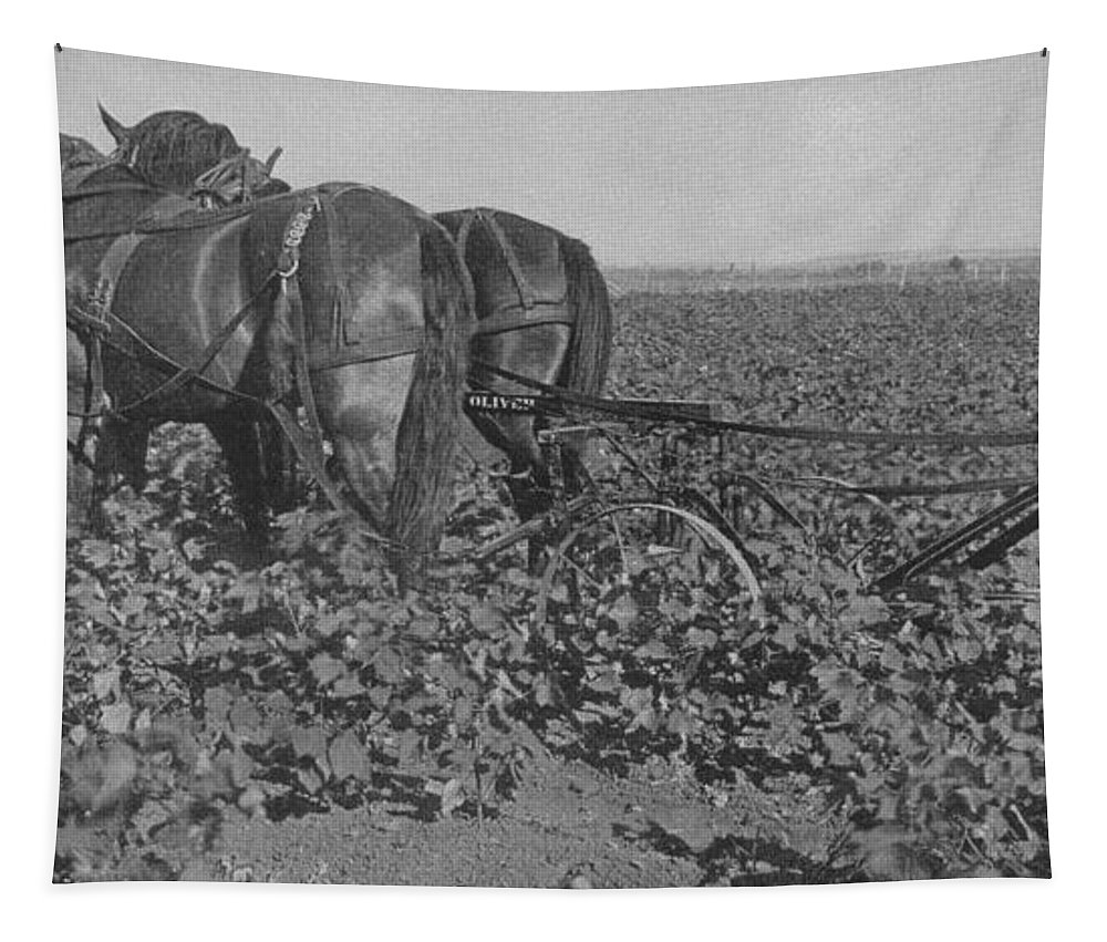 Horse Tapestry featuring the photograph A Farmer Using A Cultivator by American School